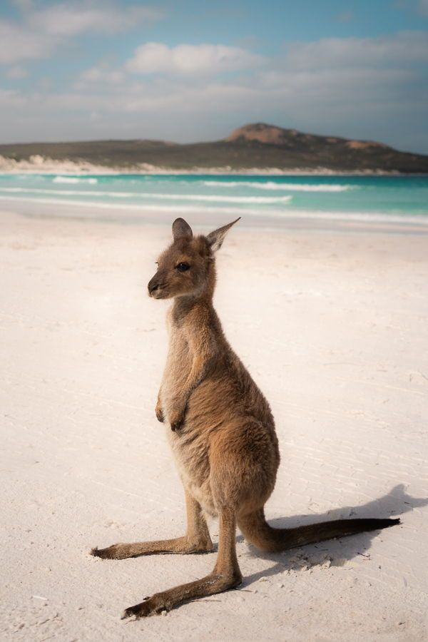 The Best Road Trip Spots Along Australia's Southern Coast! — Blog — Jess Wandering