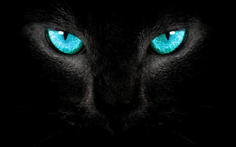 Black Panther Black Cat Art Eyes Wallpaper Cat Poems