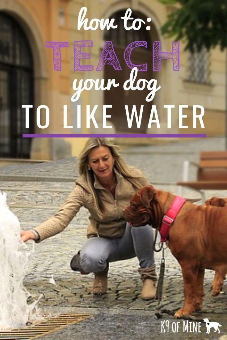 Potential educated how to train your dog that site puppy