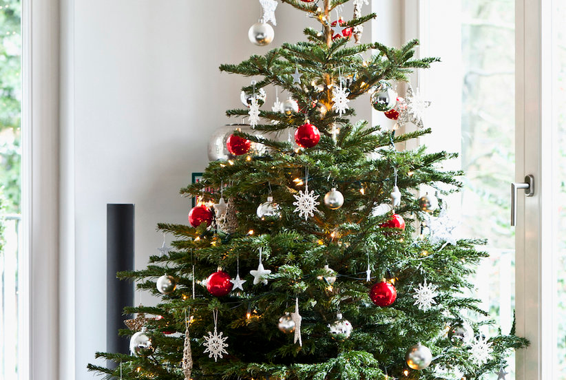 7 Essential Things You Need to Know Before Buying Your First Christmas Tree | Cool christmas ...