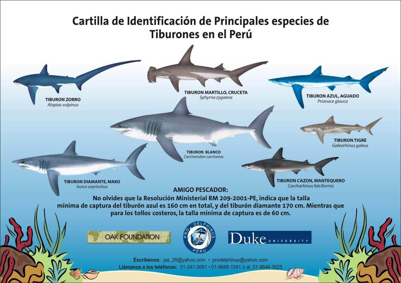 Tiburones Caribe - Buscar Con Google