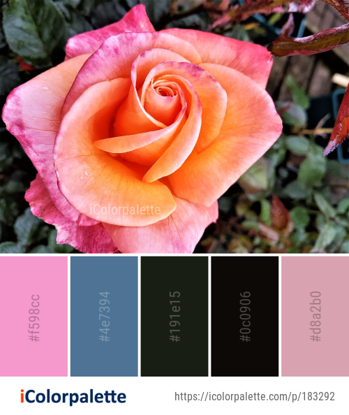 Color Palette Ideas From Rose Flower Family Image Flowers Color Palette Color