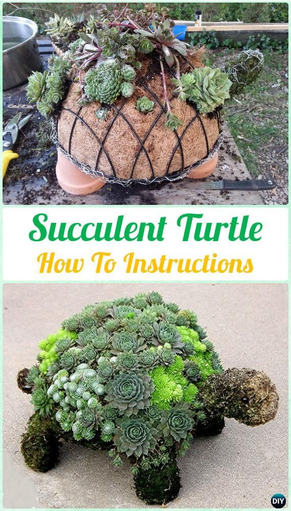 Diy Succulent Turtle Topiary Instruction Diy Indoor