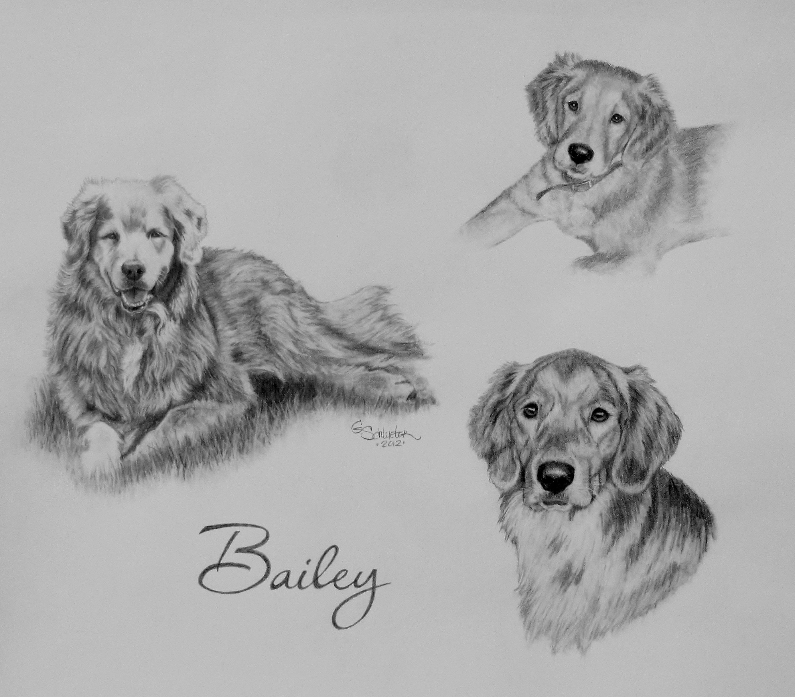 Pin On Pet Portraits Dog Drawings Sketches [ 2434 x 2777 Pixel ]