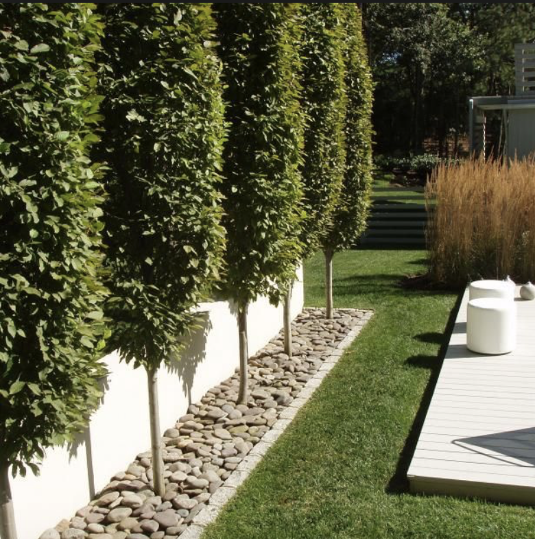 Pin de bergie en backyard pinterest jardines de casa for Jardines de patios modernos