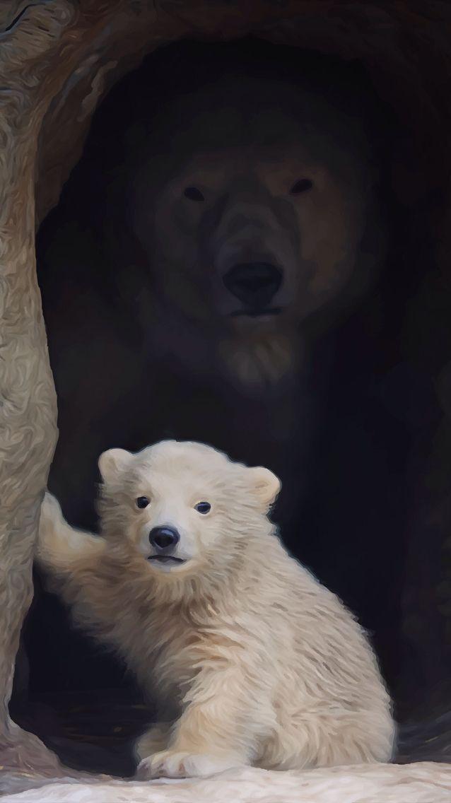 Polar bear wallpaper wallpapersbackgrounds pinterest bear polar bear wallpaper voltagebd Images