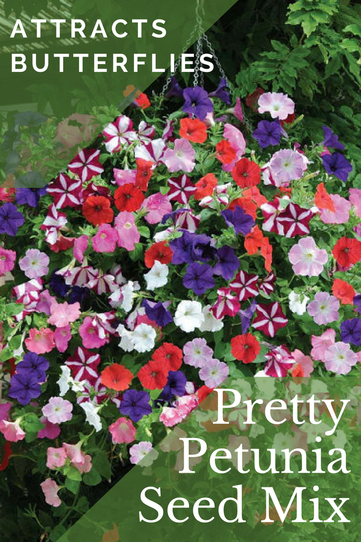 f6b98ce9 I love petunias - they're so colorful & perky! They are excellent ...