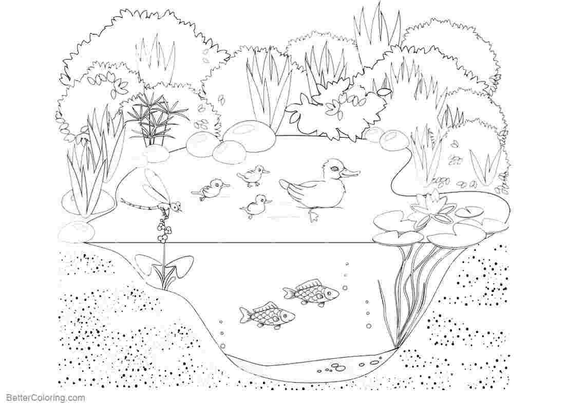 Pond Animal Cards Lesson Plans The Mailbox Pond Animals Pond