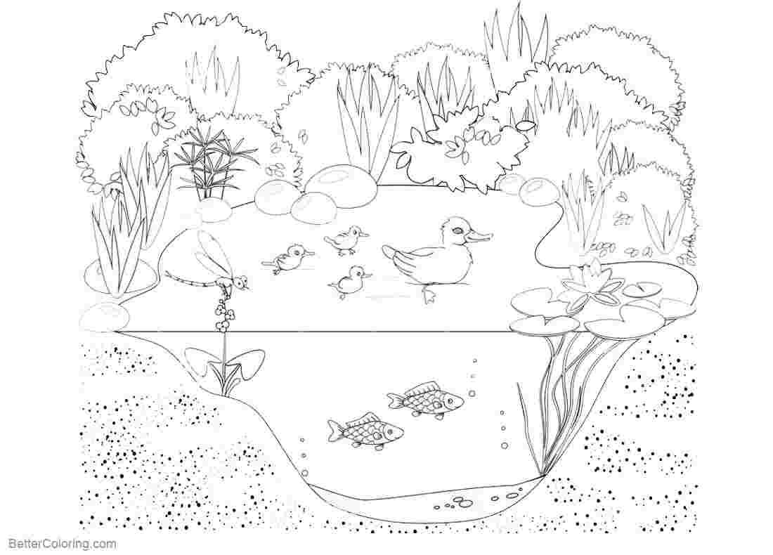 Coloring Festival Pond Animal Coloring Pages More Than 36