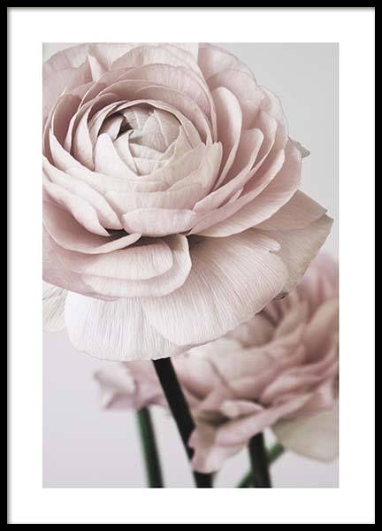 Pink Flower Dream No2 Poster in der Gruppe Poster / Größen und Formate / 50×70…