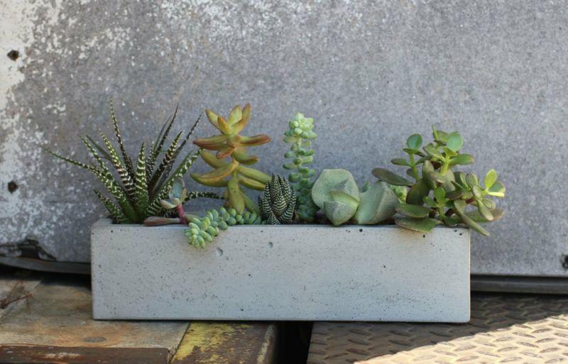 pflanzkübel aus beton blumenkasten idee laenglich form sukkulenten ...