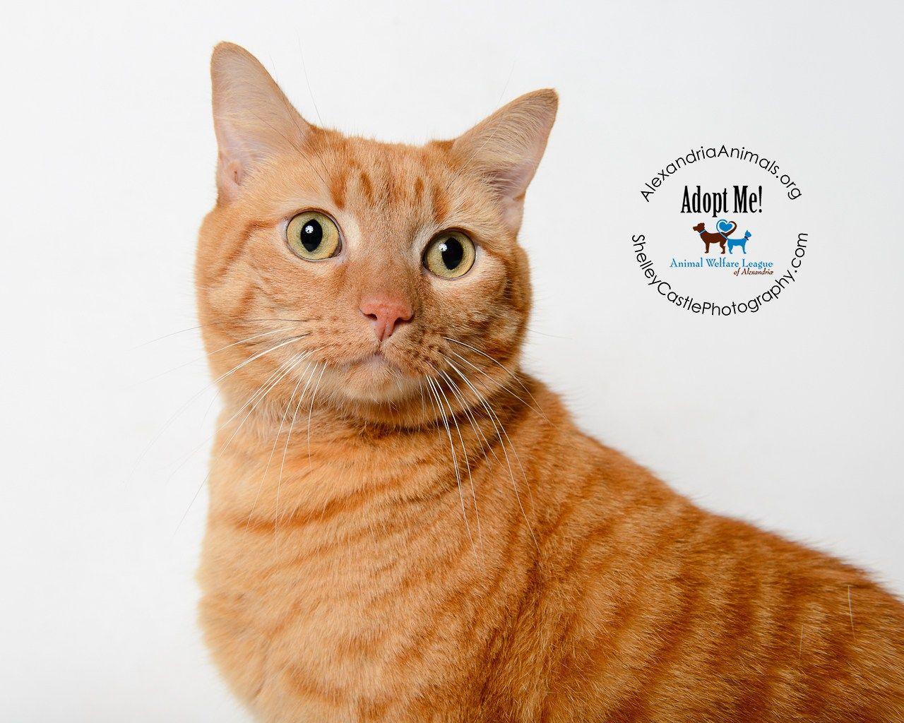 ADOPTED! Benny Animal Welfare League of Alexandria ACR