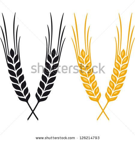 ears of wheat barley or rye vector visual graphic icons ideal for rh pinterest ca barley vector free barley vector art