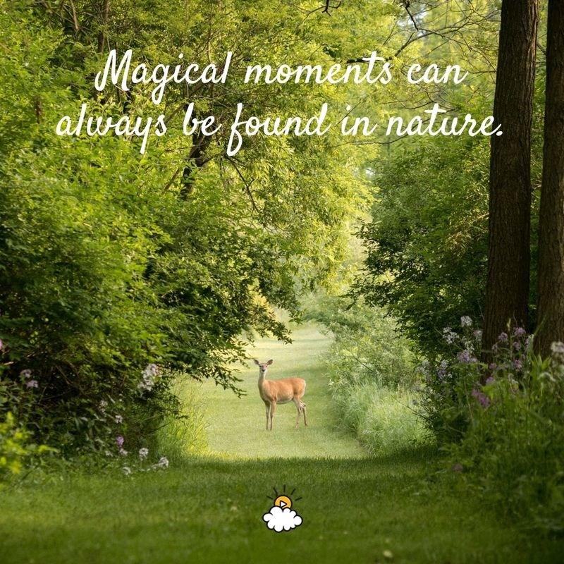 Magical Moments Can Always Be Found In Nature Inspiring Quotes From Littlethings Nature Inspiration Inspirational Quotes Nature