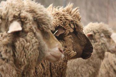Massachusetts Sheep & Woolcraft Fair | Events for Fiber