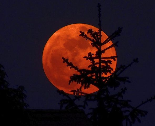 Super Moon! This picture of an orange moon from Beavercreek