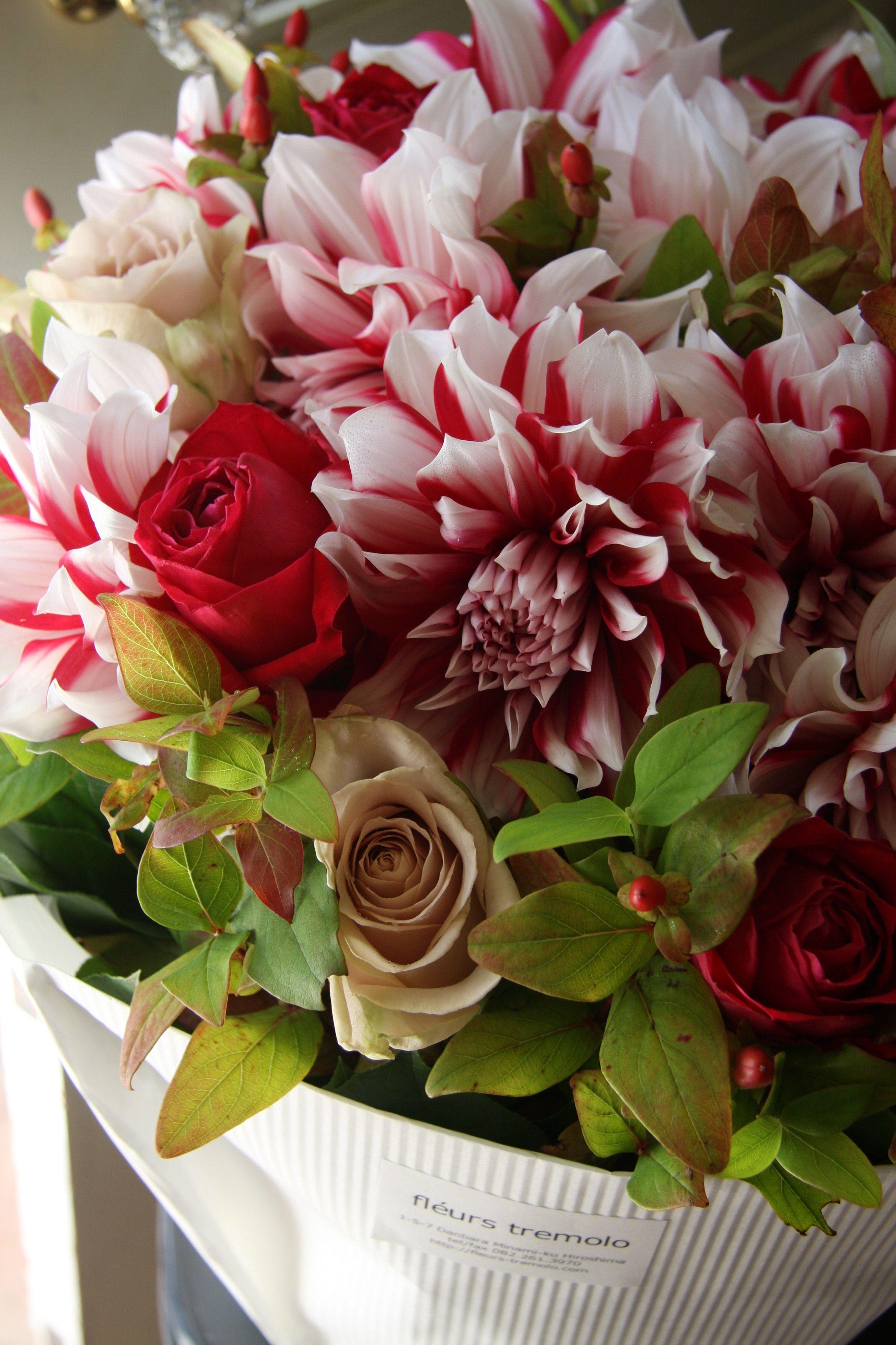 dahlia and rose