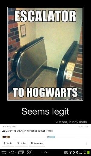 I Want One Although I Feel Like If I Had One It Would Lead To Ilvermorny As I Am An Americ Harry Potter Memes Hilarious Harry Potter Jokes Harry Potter Memes
