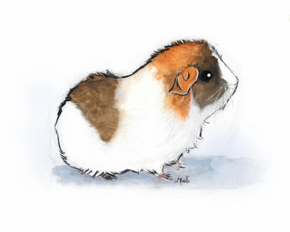 Cavy Cute Small Animals: Original Watercolor Painting Print - Brown ...