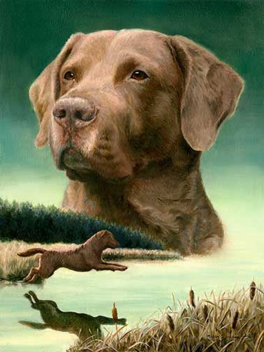 Entry A Limited Edition Chesapeake Bay Retriever Print Training