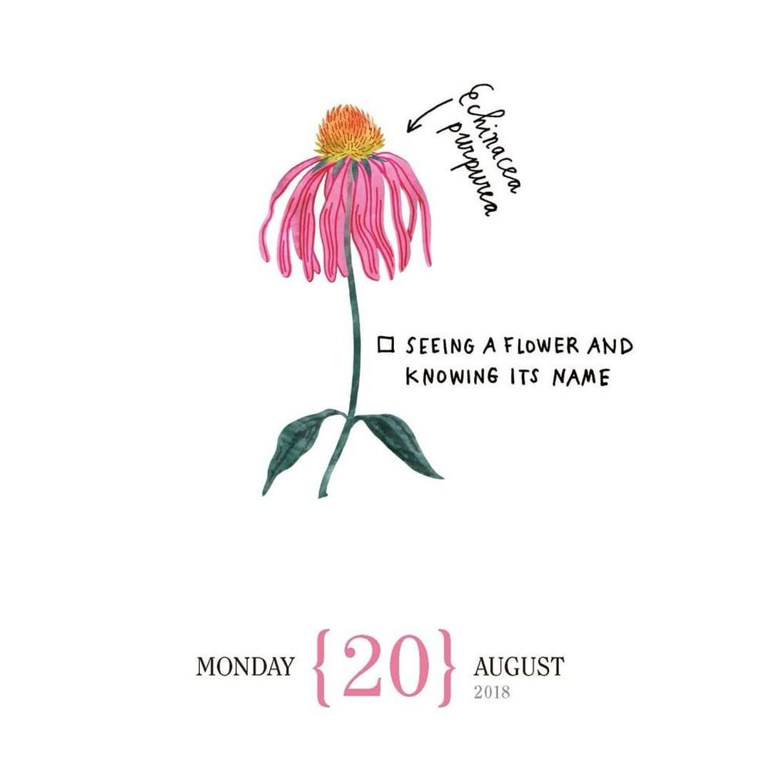 Seeing A Flower And Knowing Its Name Echinacea Purpurea Echinacea Echinacea Purpurea Flow Magazine