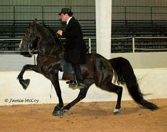 Bama State Horse Racking How Beautiful Is That Tennessee Walking