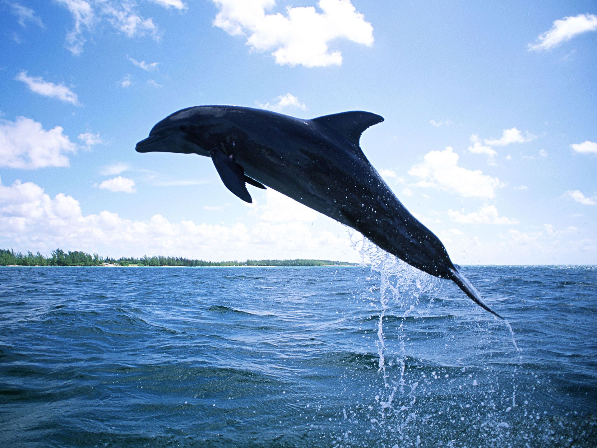 free dolphin wallpapers for desktop wallpaper