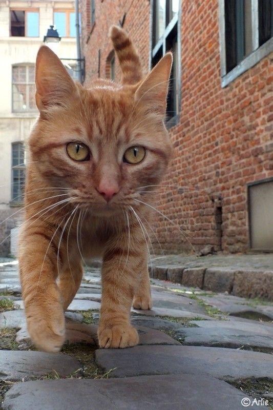 Life S Little Treasures Photo Beautiful Cats Cute Cats Orange Cats