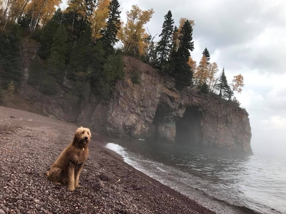 These 10 Dog Friendly Trails In Mn Are A Must Hike Dog Friendly Trails Trail Dog Hiking Dogs