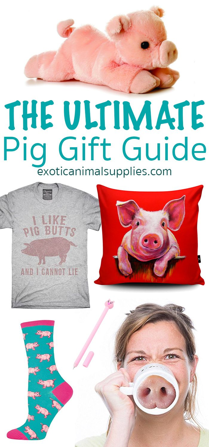 22 Cute & Funny Pig Gifts | Funny pigs, Gifts for pet ...