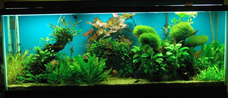 Freshwater Planted Tank Display Freshwater Aquarium Tropical Fish Store Tropical Fish