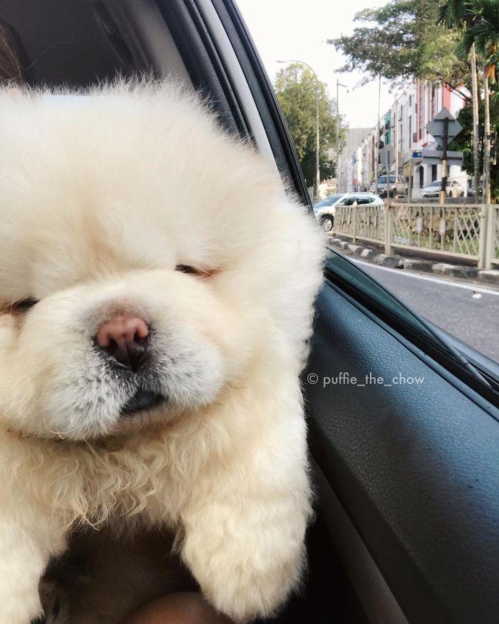 Must see Spherical Chubby Adorable Dog - a731969620ff92fe9d80ee99fd47c629  Photograph_369344  .jpg