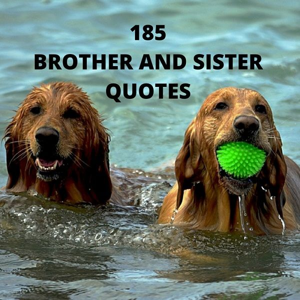 Sister to brother quotes and sayings-6589