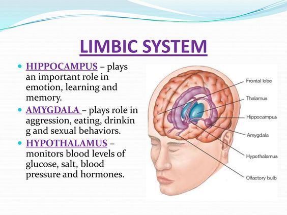 Anatomy of the limbic system