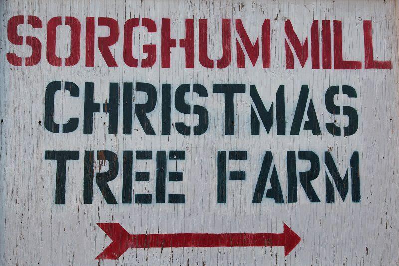 Dharma Anchor On Wordpress Com Tree Farms Christmas Tree Farm Trees To Plant