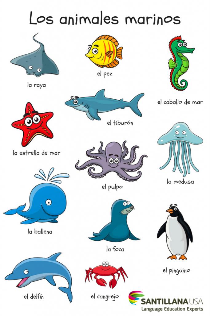 Los Animales Marinos Languagescultures Pinterest Spanish