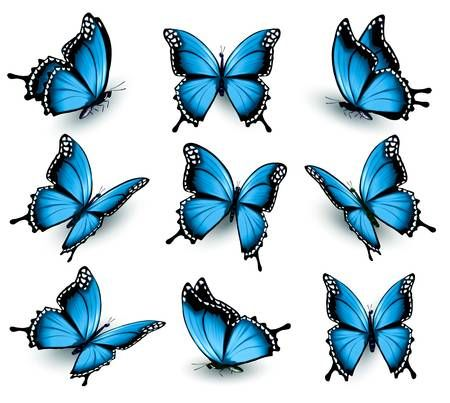 Photo of Set of the beautiful blue butterflies.
