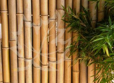 Bambus Sichtschutz und Zaun Edle BambusElemente mit