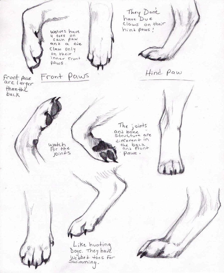 Wolf Legs Paws Paw Drawing Wolf Paw Animal Drawings