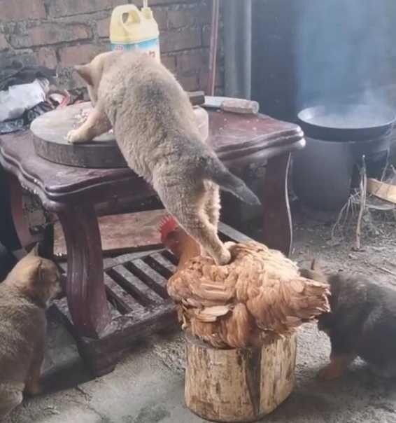 Low grade mysticism: cat edition - memes post