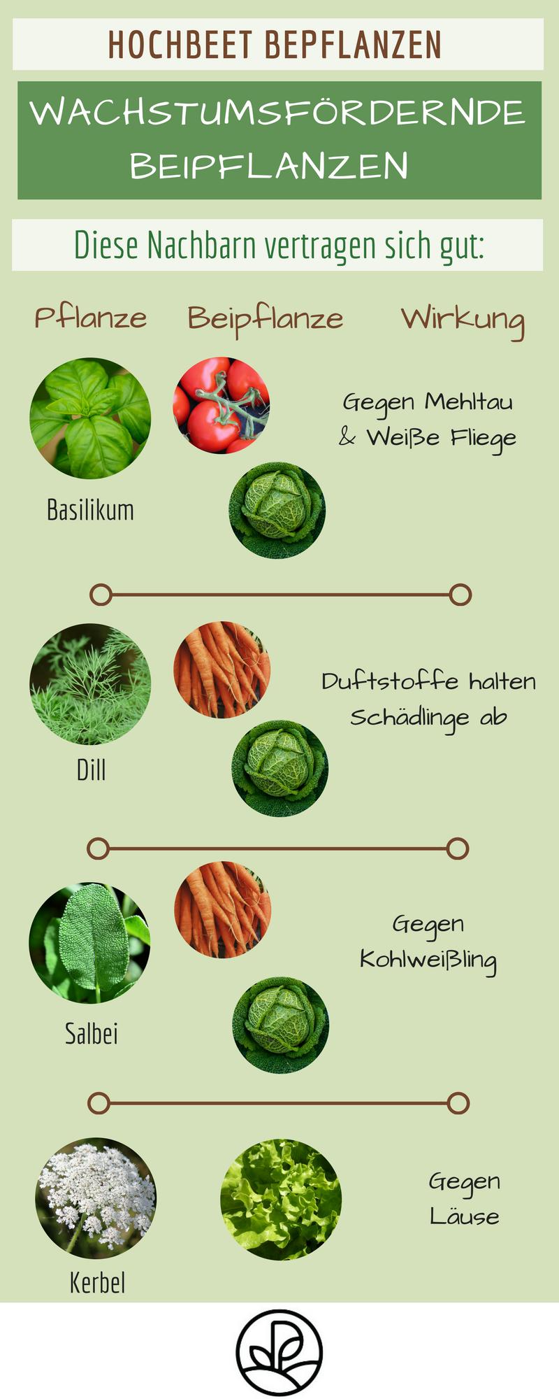 Hochbeet Fruchtfolge Schadlingsvertreibende Pflanzen Schadlinge