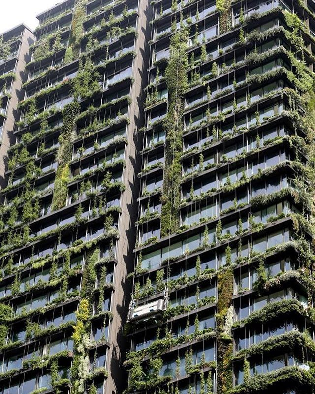 Peregrine Falcons Frogs And Bees Move Into Sydney S Central Park In Unprecedented Natural Growth Central Park Apartments Central Park Vertical Garden