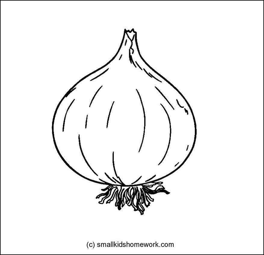 Onion Jpg 877 849 Outline Pictures Easy Coloring Pages