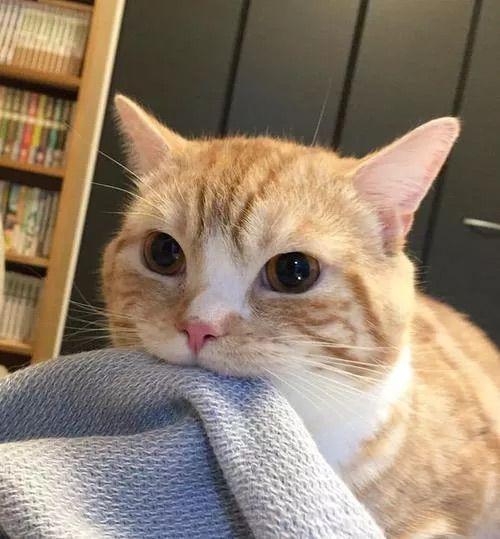 Resultado de imagen de foto gato piso