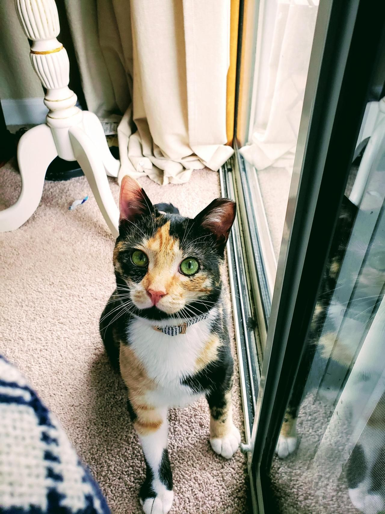 cute kittens for sale near me Cat pictures for kids