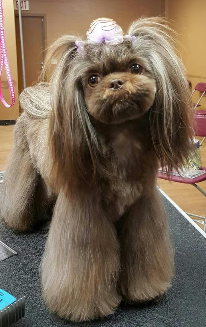 Shih Tzu Dog Grooming Shih Tzu Dog Grooming Dogs