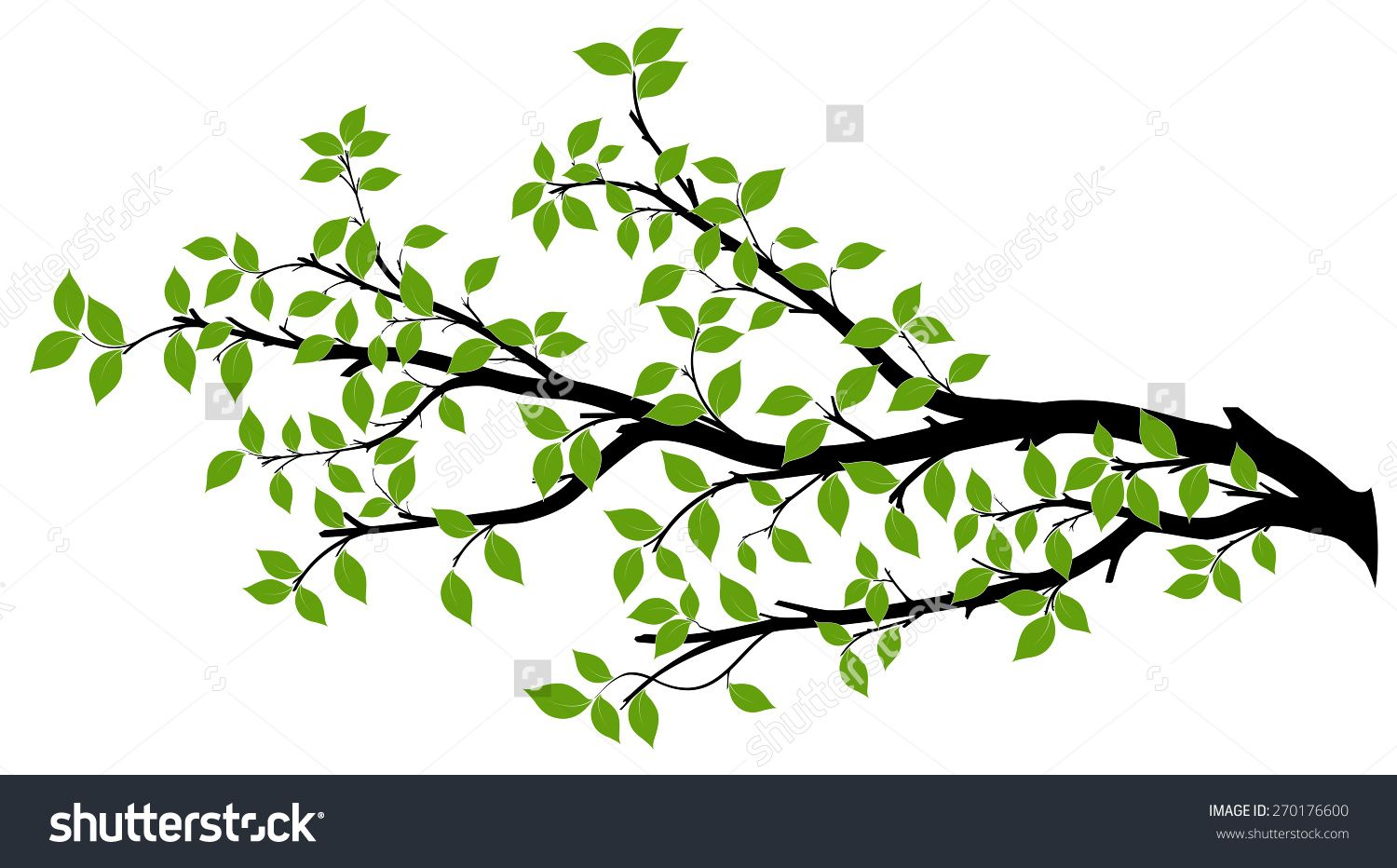 tree branch with green leaves over white background vector