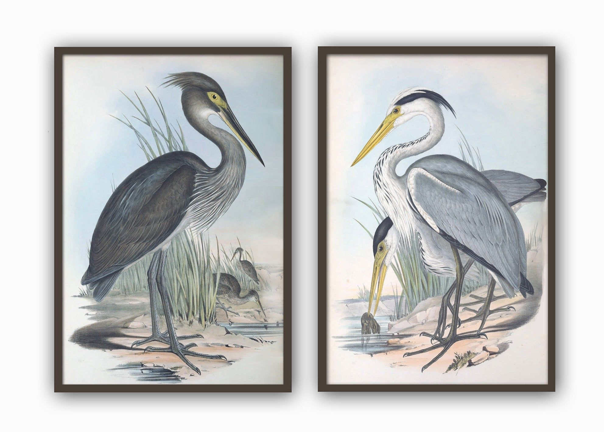 Birds Print Set Of 2 Crane And Heron Print Large Wall Art Etsy In 2020 Vintage Bird Illustration Bird Prints Bird Wall Art