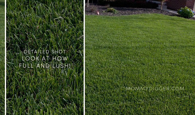 Trugreen Lawn Care Review Details Lawn Care Lawn Care Tips Summer Lawn Care