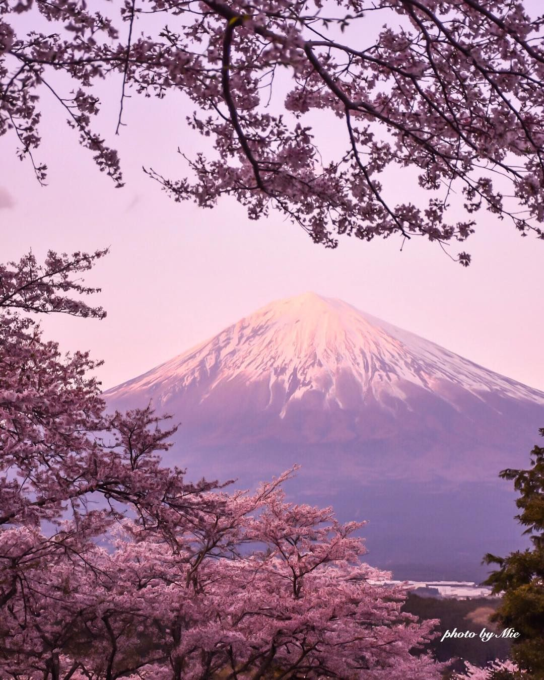 Cherry Blossom And Mt Fuji Japan 桜 Cherryblossom In 2019